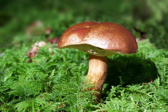 houba v kapradí.jpg