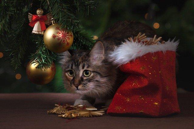 kočka pod stromečkem