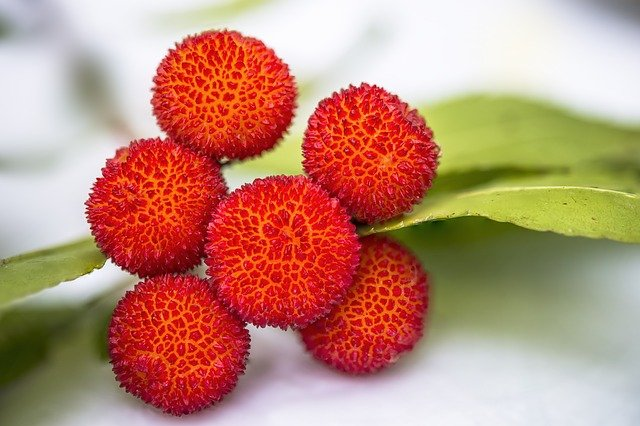 tropické ovoce liči