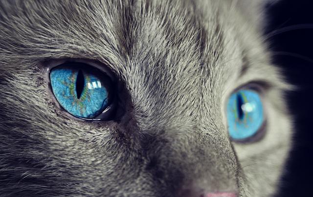 oči kočky